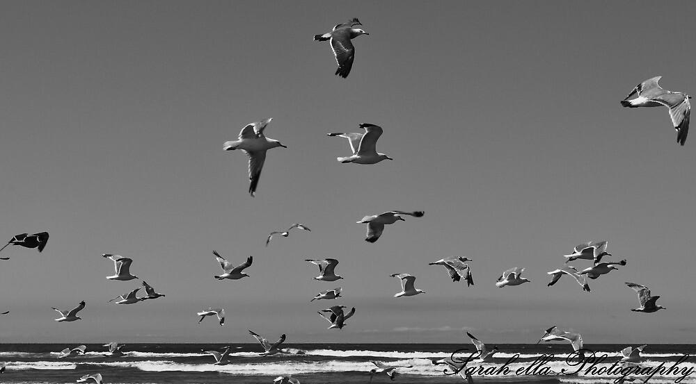 Seagulls by Sarah Ella Jonason