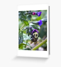 Bumblebee on Lungwort Greeting Card