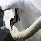 Swanlike by ravishlondon