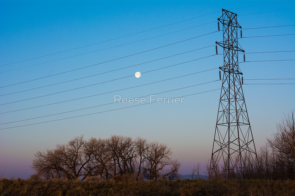 Electric Morning by Reese Ferrier