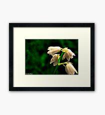 Spring Flowers 2 Framed Print