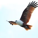 Beautiful Kite by byronbackyard