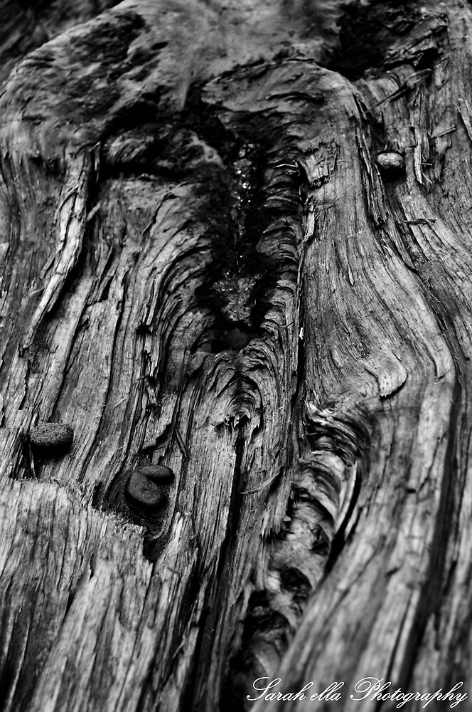 vagina wood by Sarah Ella Jonason