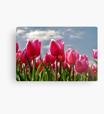 Tulips, tulips, tulips...... Metal Print