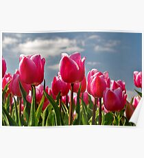 Tulips, tulips, tulips...... Poster