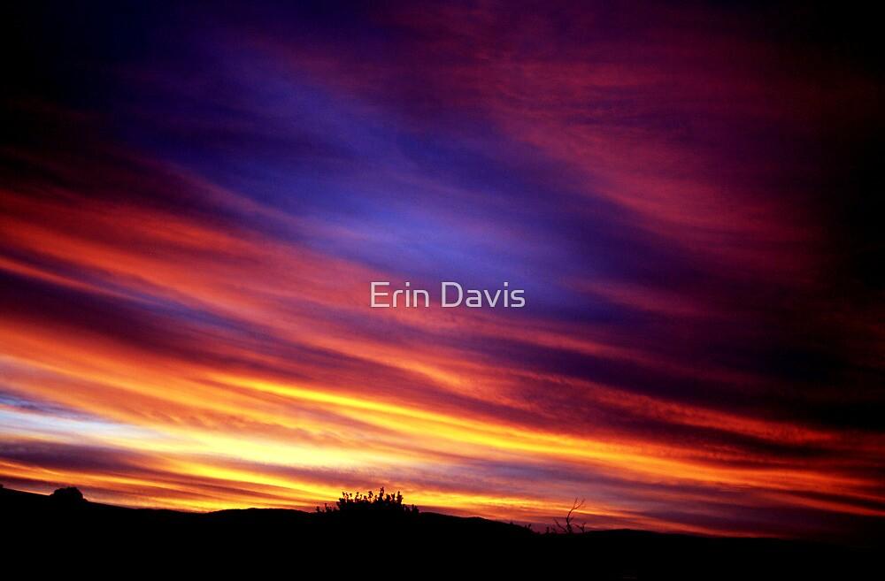 Bemboka Splendor No. 2  by Erin Davis