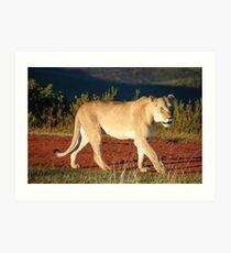 Gondwana Lioness Art Print