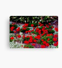 Geranium glee Canvas Print