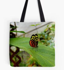 Mindo Butterfly Poses Tote Bag