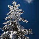 Winter Love by redtree