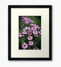 Purple Gerbera Framed Print
