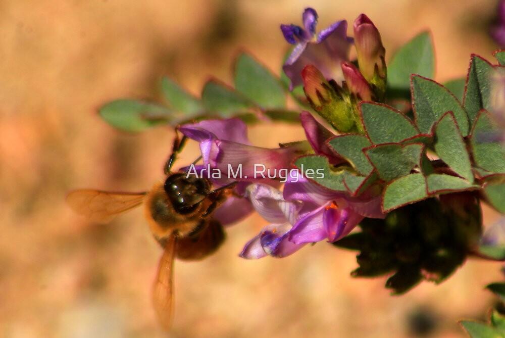 Sweet Nectar by Arla M. Ruggles