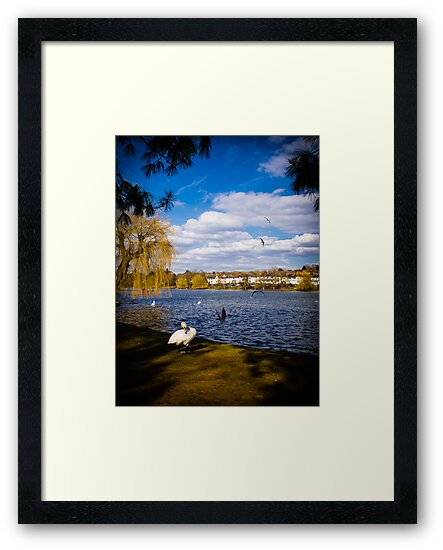 Roath Park Lake Cardiff Wales by mlphoto