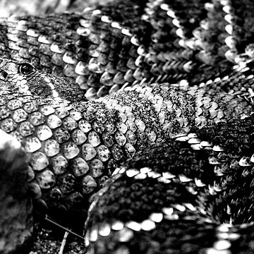 Rattler by coldairballoon