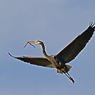 011511 Great Blue Heron by Marvin Collins