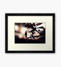 Empty.... Framed Print