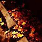 Fall Curb by Sarah Ella Jonason