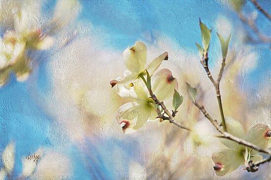 Dogwood Against Blue Sky by Lois  Bryan
