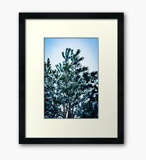 Pine tree with snow Framed Print