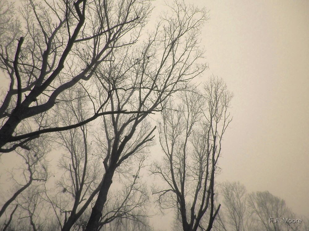 Trees Waiting for Winter by F.A. Moore