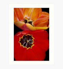 pretty tulip pair Art Print