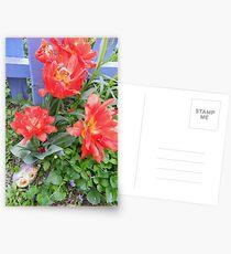 Poppy Tulips  Postcards