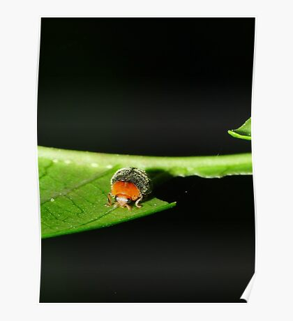 Fury Little Ladybird Poster
