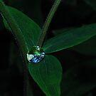 Rain Jewel by Tori Snow