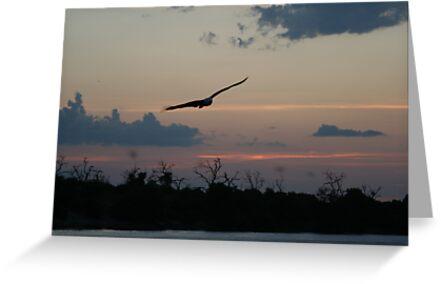 African Sunset #10 by Pauline Adair