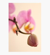 Orchid Bud Photographic Print