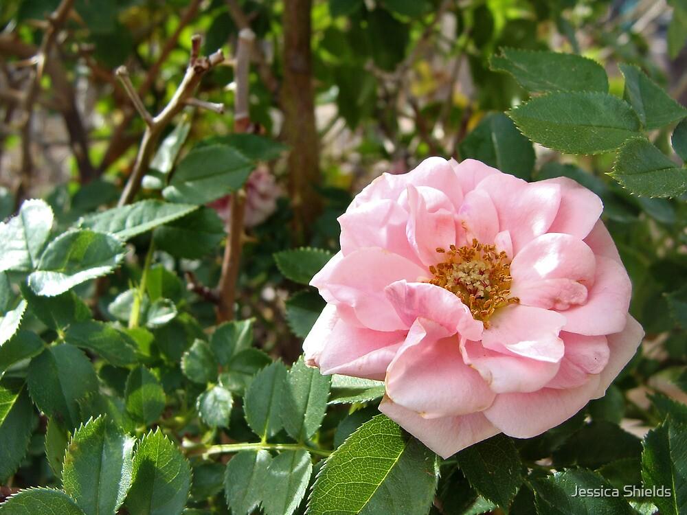 Pretty in Pink by Jessica Shields