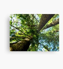 Tall Trees Metal Print