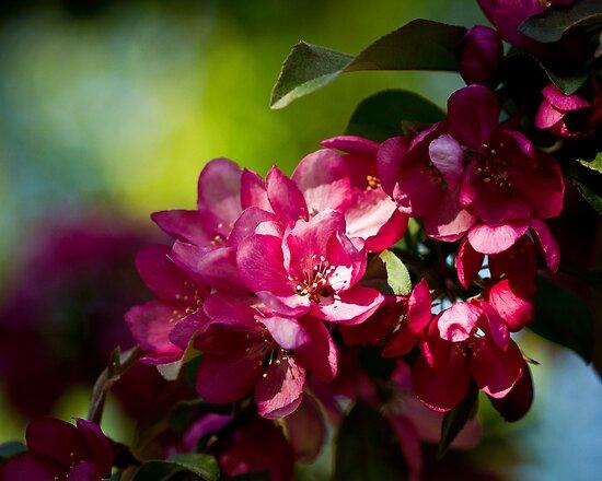 A Promise of Apples by ElyseFradkin