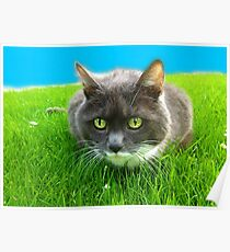 As green as grass Poster