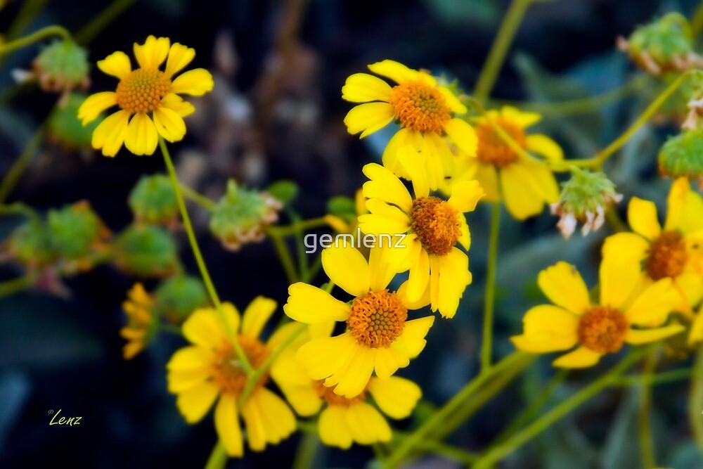 Wildflowers by George Lenz