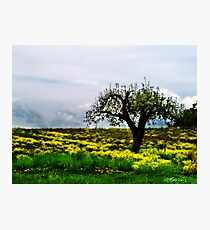 """""""Alone In The Field"""" Photographic Print"""