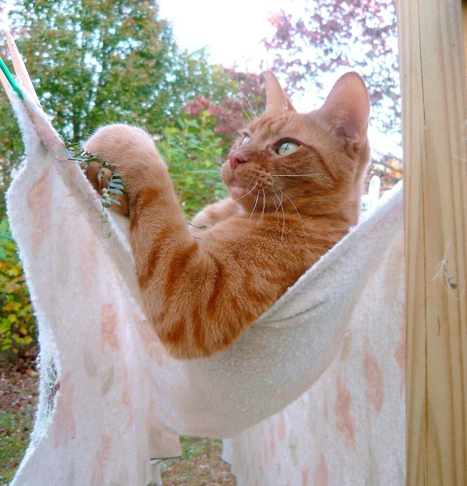 Hangin' Out!  by Vivian Eagleson
