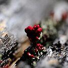 Moss by lumiwa