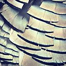 turkey feathers  by lifewith4