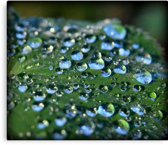 Blue Dew by Sheri Nye