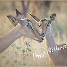 HAPPY MOTHERSDAY! - GELUKKIGE MOEDERSDAG ! by Magriet Meintjes