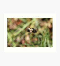 Carpenter Bee Chilling Art Print