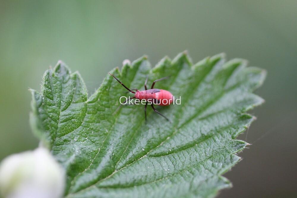 Box Elder Bug Nymph by Okeesworld