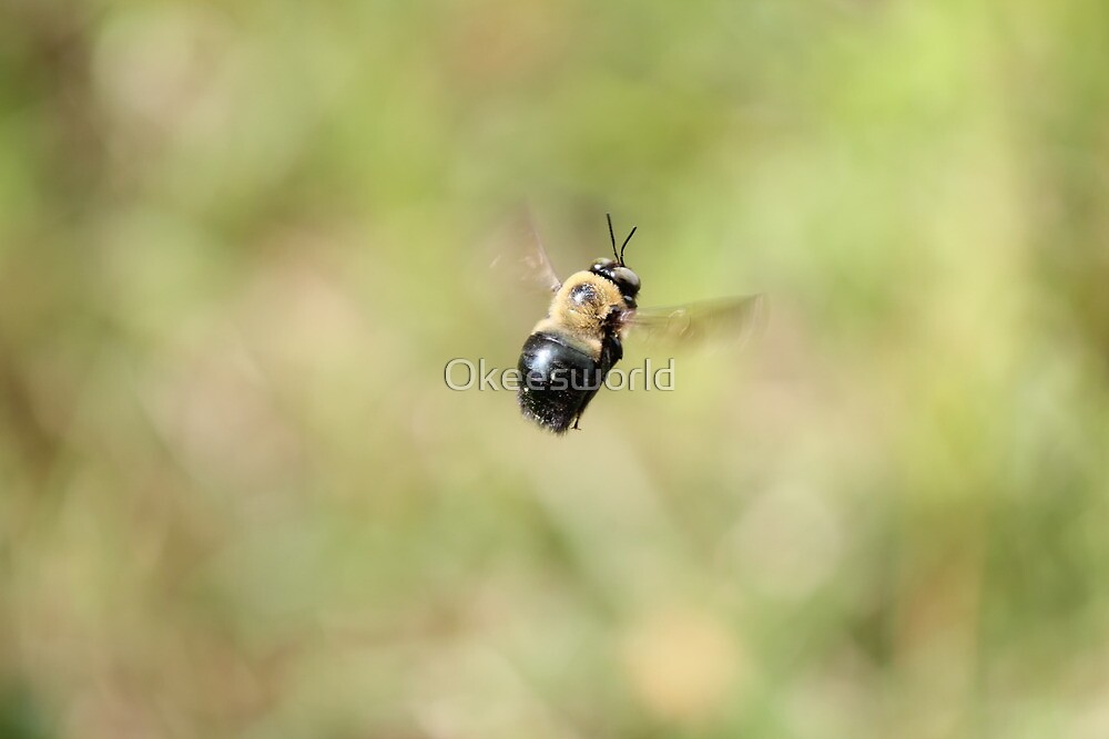 Just Buzzing about by Okeesworld