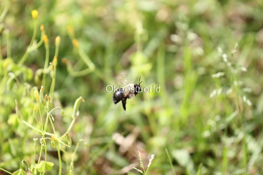 The Bee o_O by Okeesworld