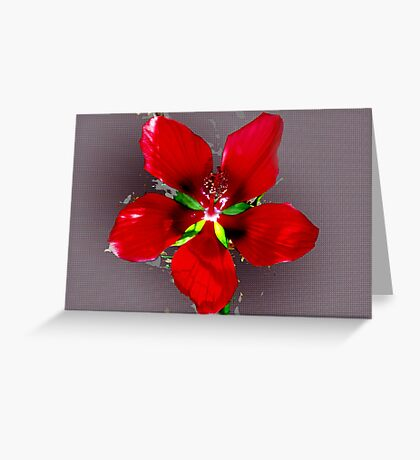 Swamp hibiscus Greeting Card