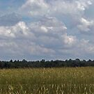 Wheat Fields by PeggySue3