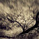 Rushing Thunder by Birgitta   †