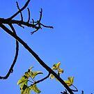 Branch on Blue by Emily McAuliffe