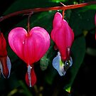 Bleeding Heart Rain by Tori Snow